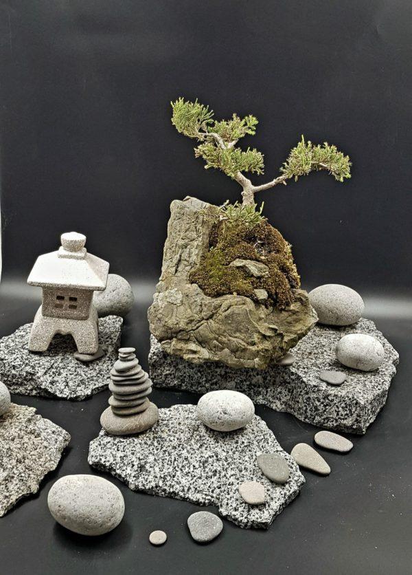 Можжевельник на камне