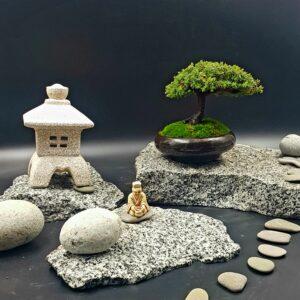 Хвойное дерево бонсай